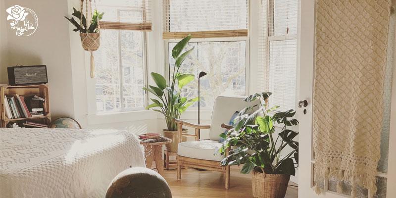 محبوب ترین گیاهان آپارتمانی