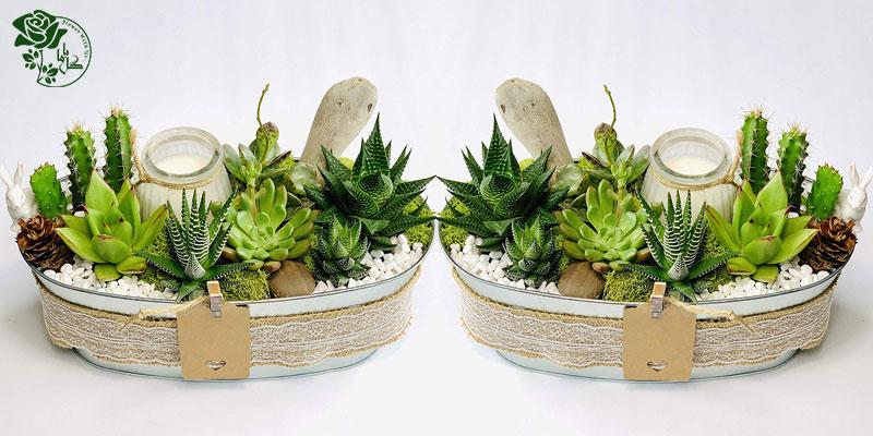 گیاه کاکتوس یکی از محبوب ترین گیاهان آپارتمانی