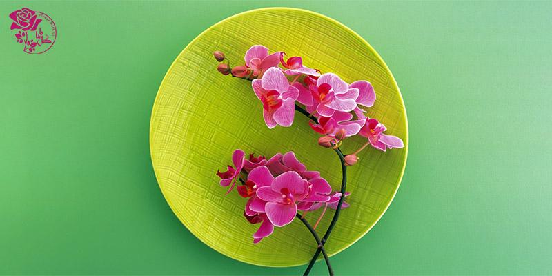 بهترین گل های ولنتاین - گل ارکیده