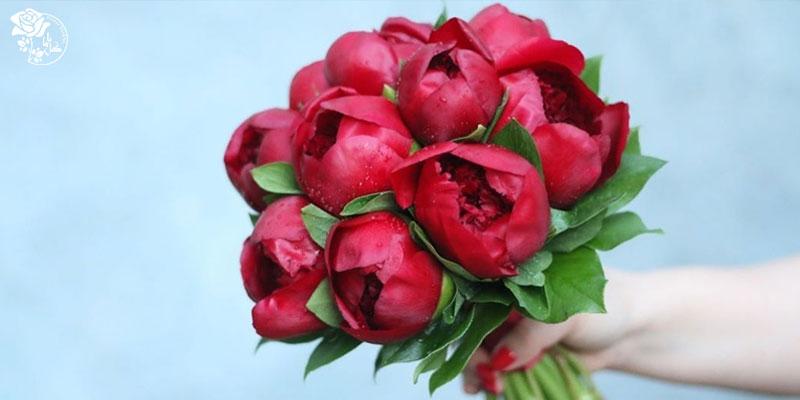 بهترین گل های ولنتاین - گل پیونی