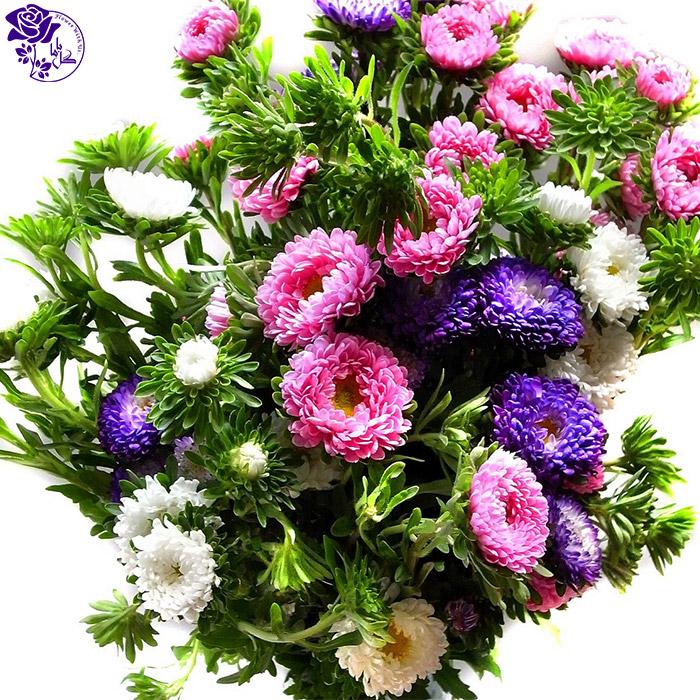 دسته گل روز مادر- گل داوودی
