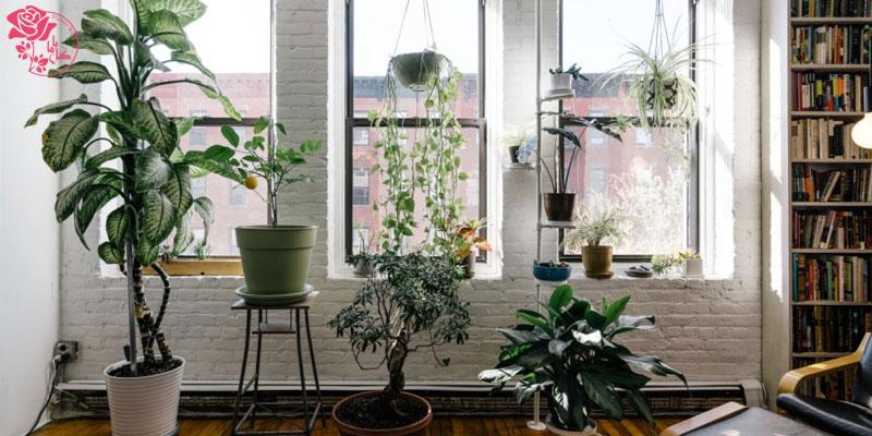 برای نگهداری از گل آپارتمانی به نور کافی نیاز دارید.