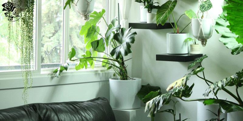 نگهداری گل آپارتمانی برای تازهکارها