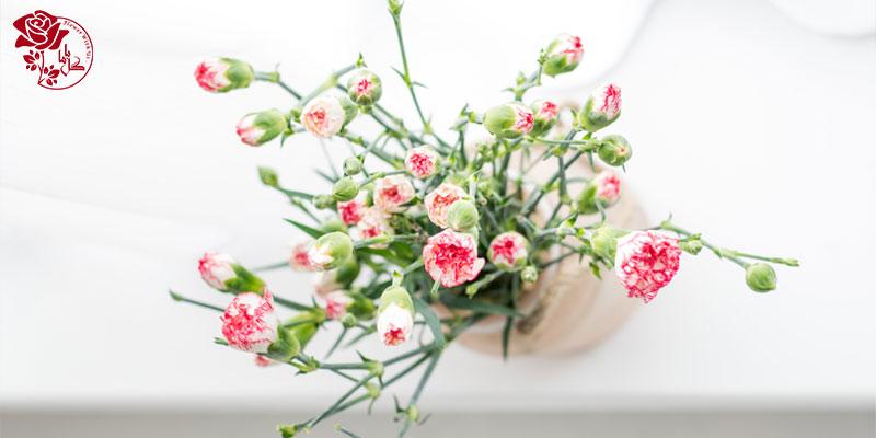 نگهداری از گلهای شاخهای