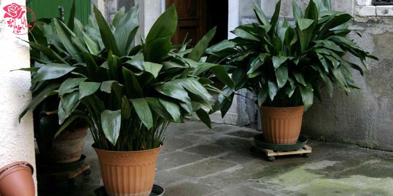 اصول نگهداری گل آپارتمانی - خاک مناسب