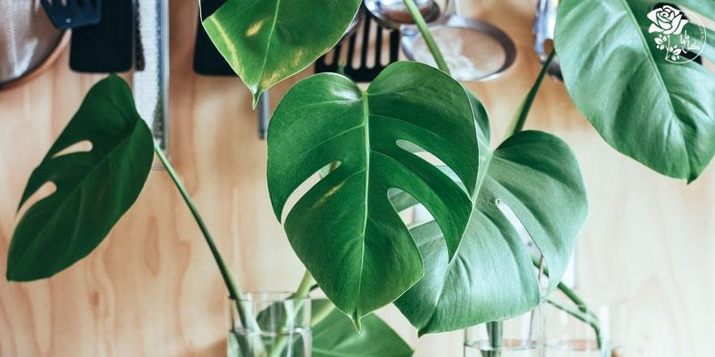 نگهداری از گل و گیاهان آپارتمانی
