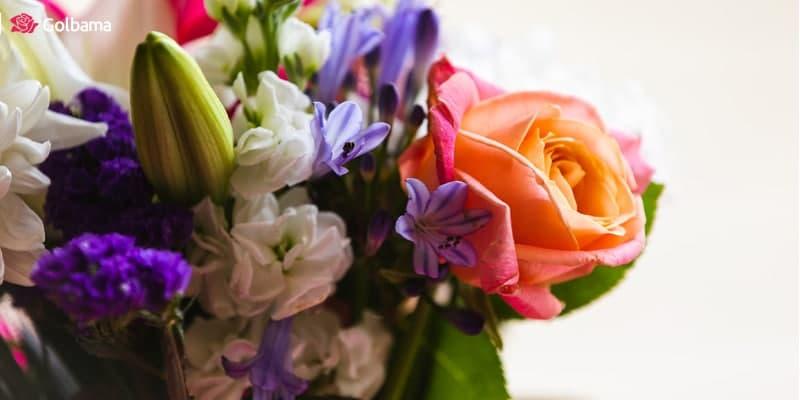 گل تولد