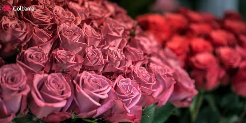 گل نوزاد دختر - گل نوزاد پسر