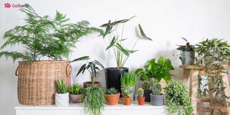 در زمستان کوددهی به گیاهان را متوقف کنید