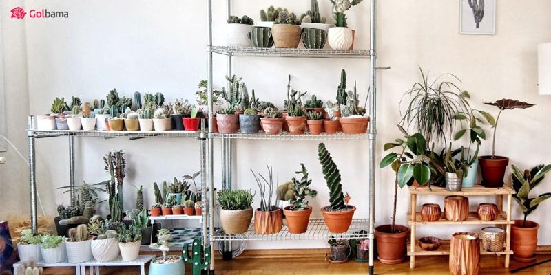 کدام گیاهان در فصل سرد مقاوم ترند؟