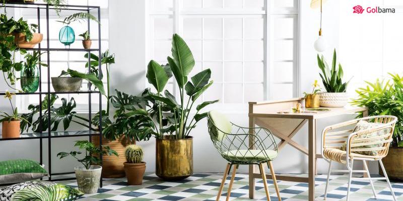 نور مناسب برای نگهداری از گیاهان آپارتمانی در فصل زمستان