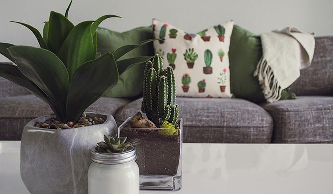 گیاهان آپارتمانی زینتی لوکس