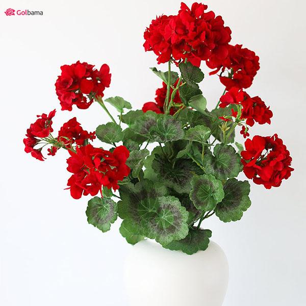 گیاه آپارتمانی سریع الرشد معتدل: 12. گیاه شمعدانی (Geraniums)