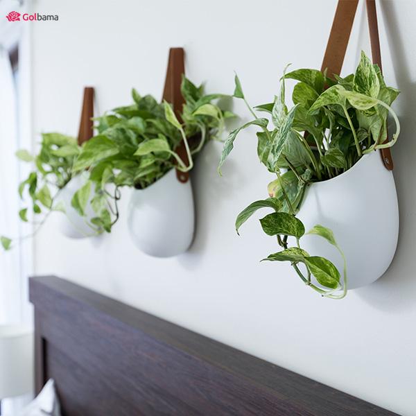 گیاه پتوس - گیاه آپارتمانی سریع الرشد