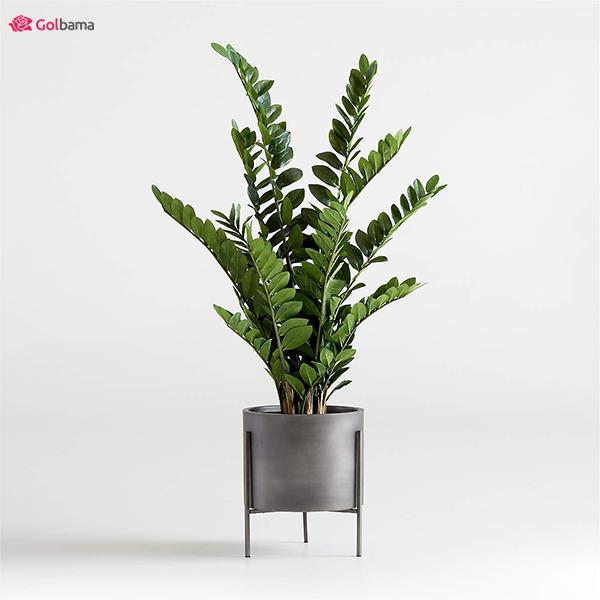 گیاه آپارتمانی کم نور: 13. گیاه زاموفیلیا (ZZ Plant) - کم توقع و مهربان