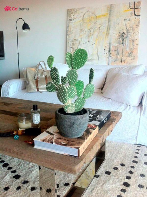 زیباترین کاکتوس گیاهان آپارتمانی زینتی: 9. کاکتوس گوش خرگوشی (Bunny Ear Cactus)