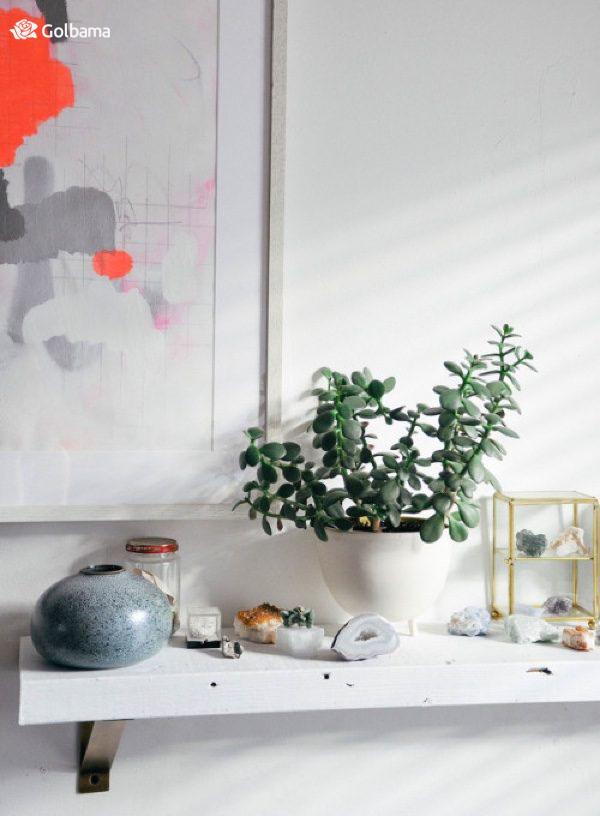 جذابترین گیاهان آپارتمانی زینتی: 3. گیاه یشم (Jade Plant)