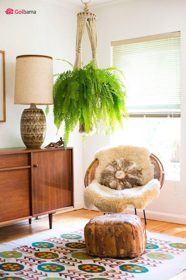 حیوان دوست ترین گیاهان آپارتمانی زینتی: گیاه سرخس بوستون (Boston Fern Plant)