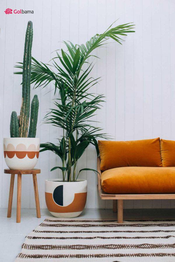 نخل اریکا (Areca Palm) تک نخل گیاهان آپارتمانی زینتی