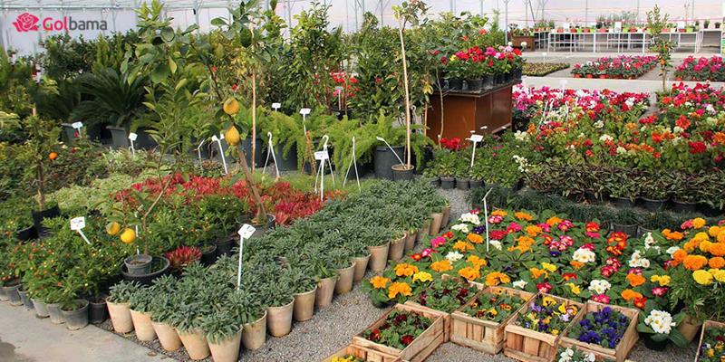 بازار گل و گیاه خاوران (امام رضا)