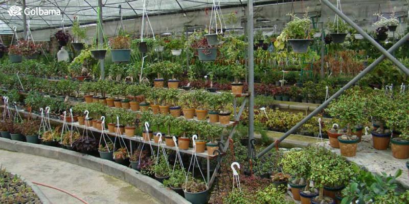 بازار گل و گیاه شهید فکوری شهر تهران