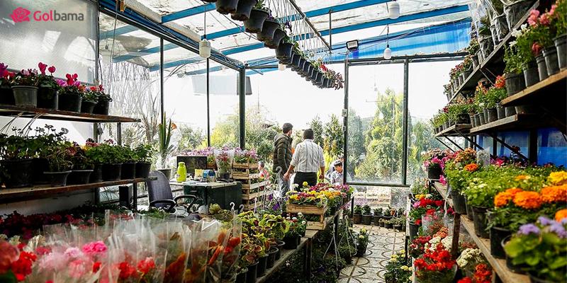 بازارهای گل تهران – بازار گل غرب تهران (آبشناسان)
