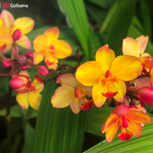 لاکچریترین نوع گلهای آپارتمانی معطر: 4. گل ارکیده (Orchids)