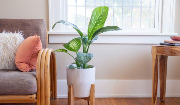 معرفی گیاهان آپارتمانی مقاوم