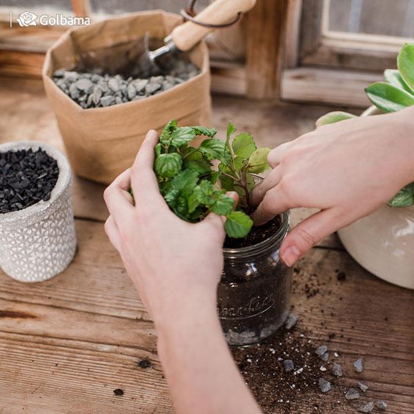 7. تعویض خاک گلدان یکی از راههای موثر از بین بردن هزارپا در گلدان