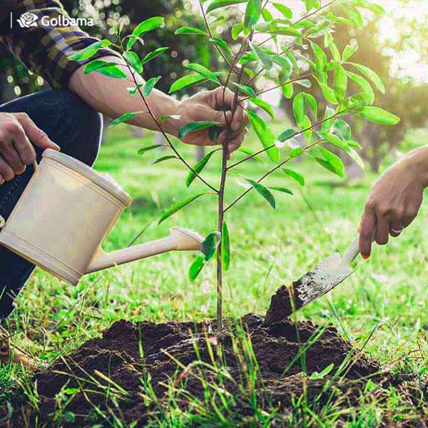 روز ملی کاشت گیاه یا همان روز درختکاری