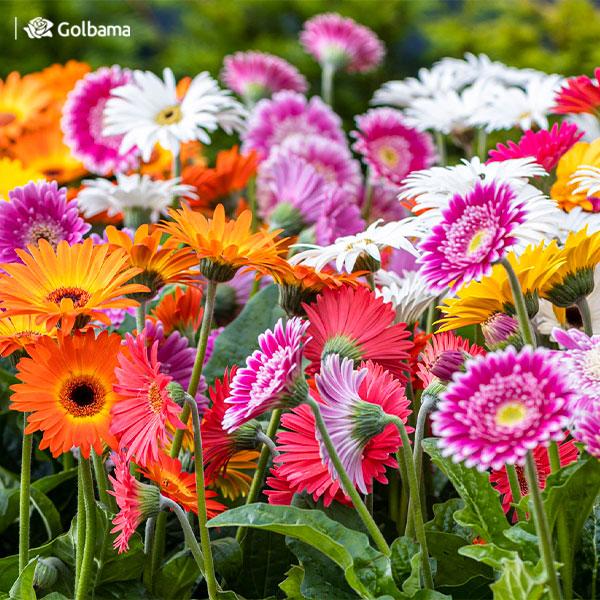 چگونه روز ملی گل و گیاه را جشن بگیریم؟