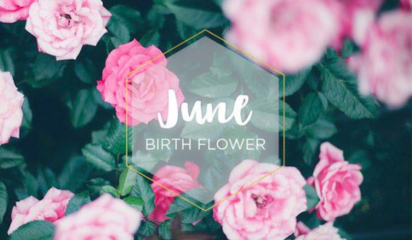 گل ماه تولد خرداد