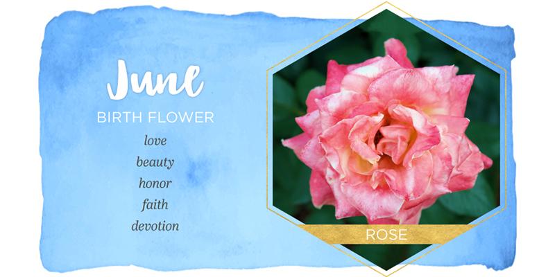 گل ماه تولد خردادی ها چیست