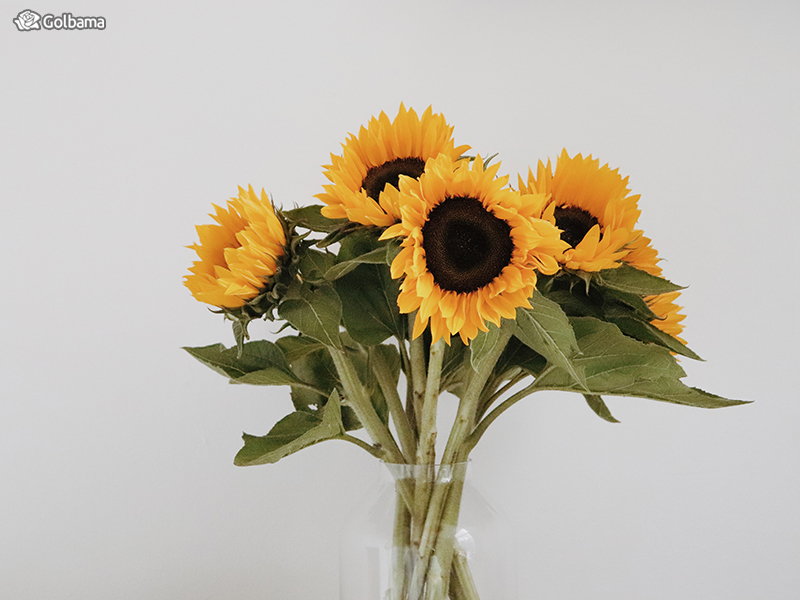 گل ماه تولد تیر ماهیها: 5. گل آفتابگردان (Sunflower)