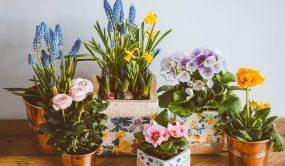 گیاهان آپارتمانی گلدار