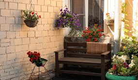 گیاهان آپارتمانی لاچکری لوکس